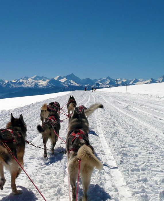 Sleigh Trips with Greenland Dogs and Siberian Huskies